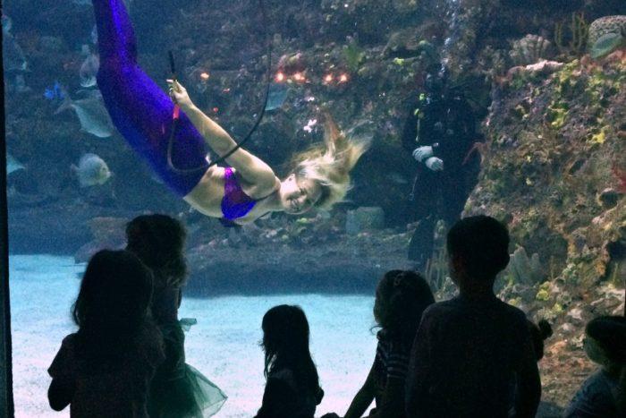 Weeki wachee mermaids