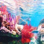 Homeschool Aquarium Field Trip: come with us!