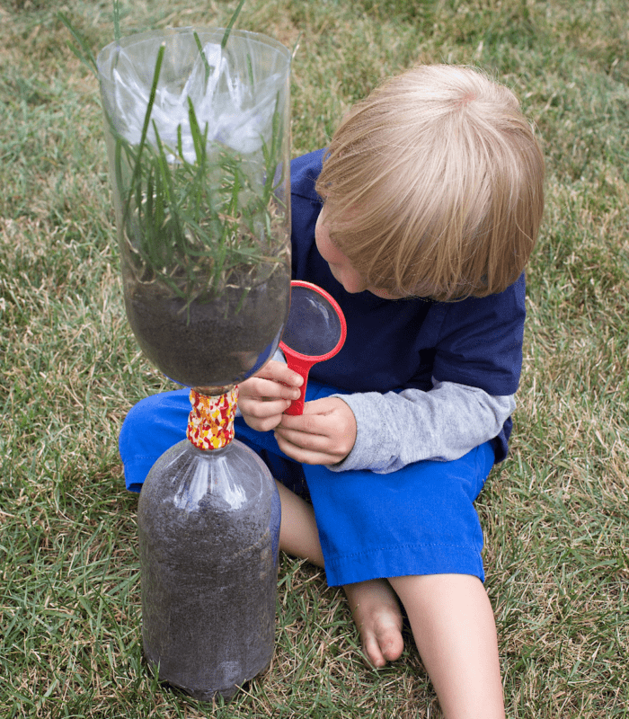 Backyard Nature Activities That Are Perfect for Summer