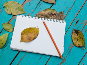 Easy Autumn Nature Study Ideas