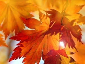 Would You Rather? Autumn Themed Questions for Kids