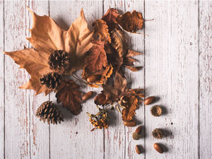 15 Awesome Autumn STEM Activities